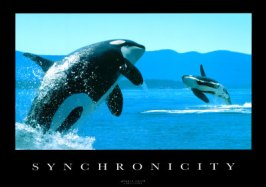 synchronicity-whales1 (1)